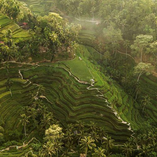 tegallalang-rice-terraces-in-bali-T9VE24D-min